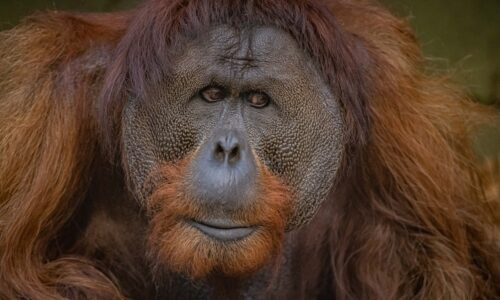 Chester Zoo's rainforest-saving conservation movement features on major new BBC wildlife documentary series